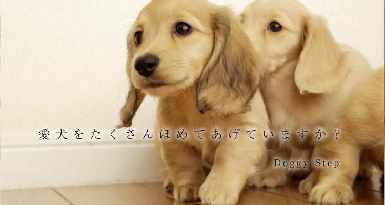 愛犬をたくさんほめてあげていますか?
